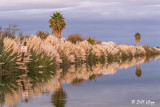 Tule Reflections  1