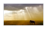 SAFARI  EN  TANZANIE - ANIMAUX