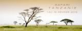 SAFARI   TANZANIE -  février 2016