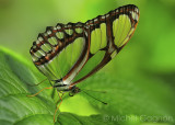 Papilllons  - Butterflies