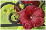 20130711_016_Garden copy.jpg