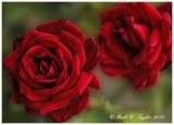 20130614_51_Garden copy.jpg