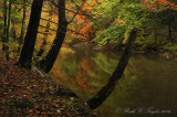 Bucks County Scenic Photography through the Seasons