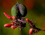 tiny bugs 1 1.jpg
