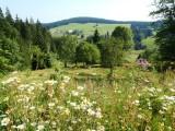 Past flowering meadows