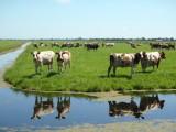 Dutch Outdoors (new)