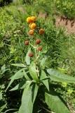 Spherical flowers