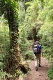 El Pionero trail