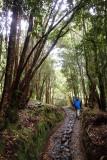 Los Rapidos trail