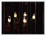 Penguins in Jail