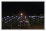 Vineyard showing Holiday spirit