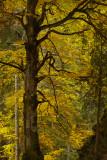 Colors of Fall - Bulgaria