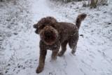 Day 036 Dog Snow