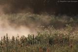 Fog & sunlight