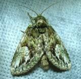 moth-05-07-2013-3.jpg