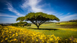 Beautiful countryside full of Meskel flowers