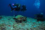 Incontro con la tartaruga , Turtle encounter