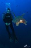 Martina e la tartaruga verde , Martina and the green sea turtle