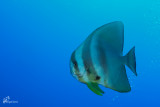 maldives_underwater__2015