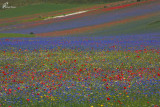 La Fiorita , Summer bloom