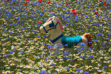 Perso tra i fiori , Lost among the flowers
