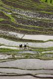 Rice field in Bali, Indonesia