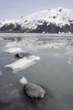 Portage glacier area