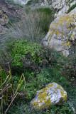 Near Ursa Lookout