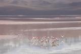 Reserva Eduardo Avaroa, Laguna Colorada