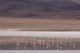 Reserva Eduardo Avaroa, Laguna Hedionda
