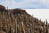 Incahuasi Island, Uyuni Salar