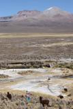 Sajama National Park, near Sajama village