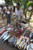 Galle, catch of the day