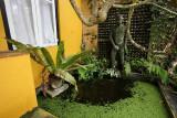 Brief Garden Bevis Bawa