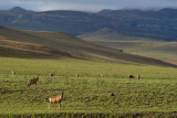 Golden Gate Highlands National Park