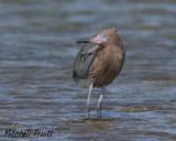 Gulf Coast Birding 2014
