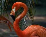 Palm Beach Zoo Taken with the Sony Rx10 III
