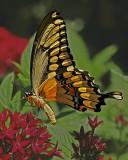 Butterflies,Birds and flowers