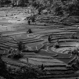 Terraced Paddy Fields