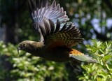 kea_flight_13_march_2014