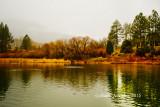 ferns_lake