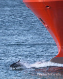 Aberdeen Dolphins 3
