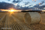 Sunkissed Harvest