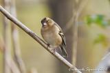 birdgarden-71.jpg