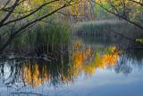 Wetlands Autumn