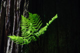 Gallery::Pacific Northwest: Forests - June, 2009