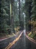 Highway Through the Redwoods Callifornia - December 2015