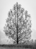 Alone Callifornia - December 2015