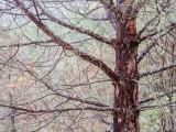 Tree in the Rain Callifornia - December 2015