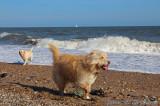 Beach boys